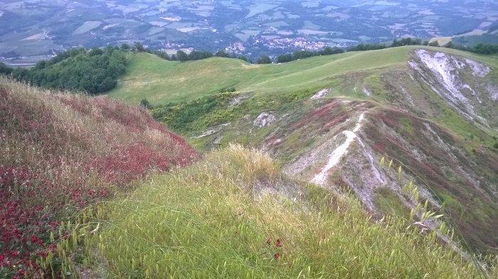 La discesa dal Monte dell'Acqua Salata verso Budriolo