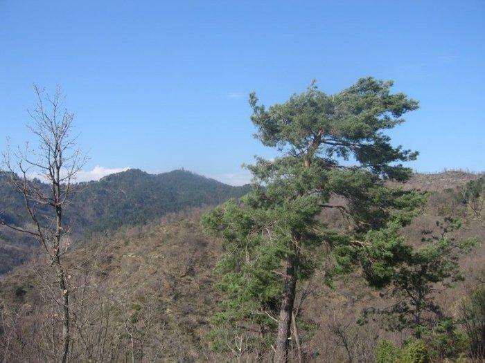Monte Battaglia (ultimo piano)
